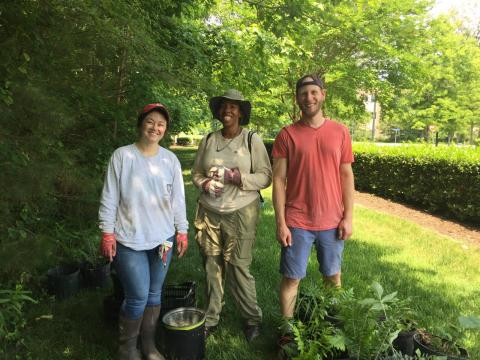 Williamsburg Native Plant Rescue Team
